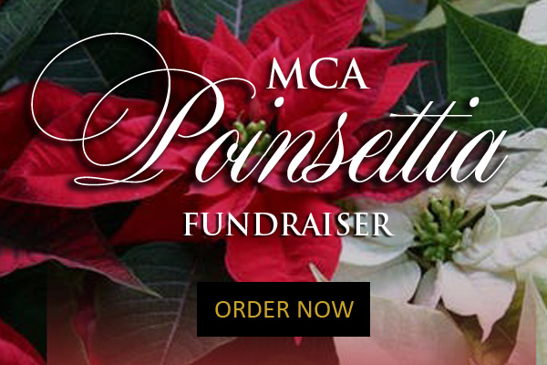 Poinsettia Pop Up Graphic